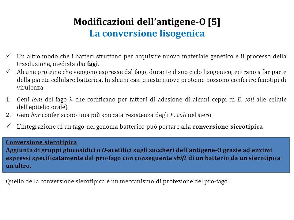 Modificazioni dell'antigene-O [5] La conversione lisogenica